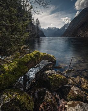 Frühling am Königssee von Thomas Weber