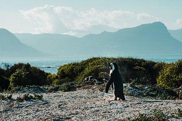 Sonnenbadender Pinguin von Pepijn van der Putten