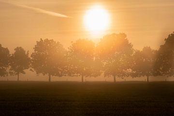 rij bomen in de mist van Tania Perneel