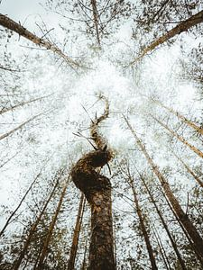 Ongebruikelijke boom van Jakub Wencek