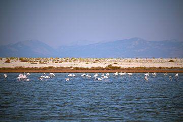 Lagune mit Flamingos von Ines Porada