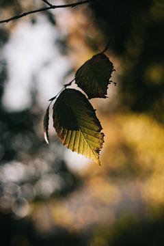 Herfst sur Regina van Pijkeren