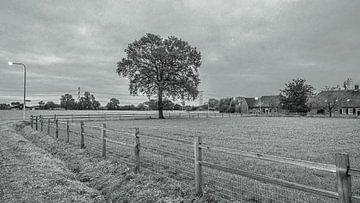 Natuurgebied Moerenburg bewolkt en grijs
