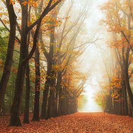 Mysteriepad in de herfst van Fabrizio Micciche