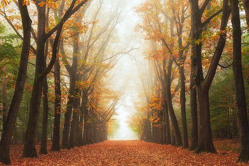 Mysteriepad in de herfst van