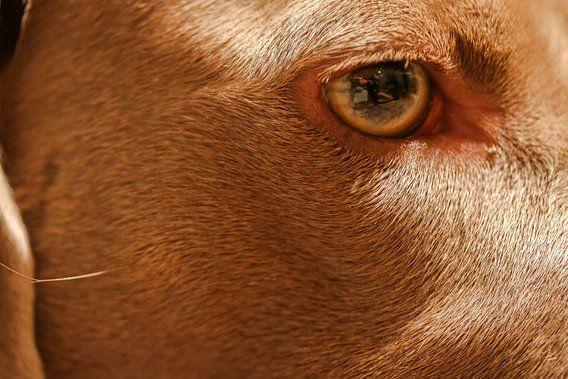 Een close-up/macro van mijn hond