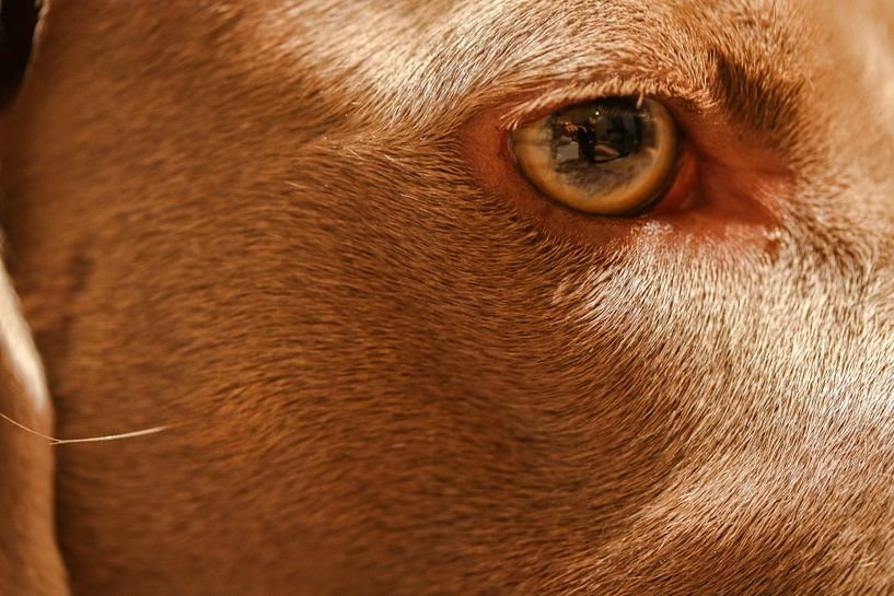 Een close-up/macro van mijn hond van Julius Koster