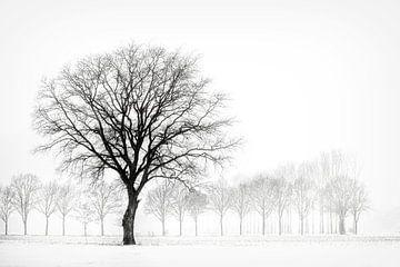Winterlandschap met boom, minimalistisch. van Ron van der Stappen