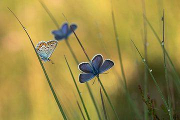 Heidekraut blau von Aukje Ploeg