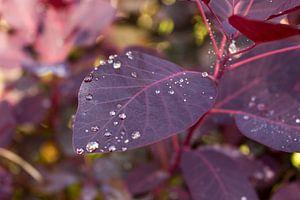 Waterdruppels op blad van