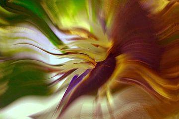 peacock colour van Gerard Stokhuyzen