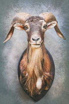 De oude Steenbok van Martin Bergsma