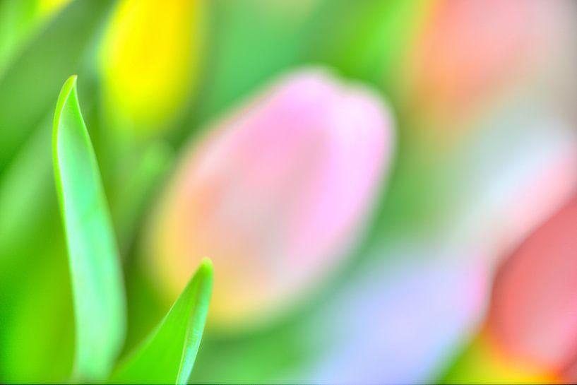 Color your life VIII van Richard Marks