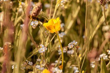 Wildblumen von Dirk Smit