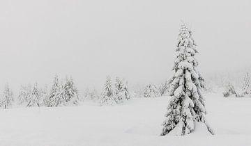 Besneeuwde Bomen in Noorwegen - 3 van Adelheid Smitt
