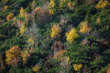 Couleurs d'automne en montagne sur Emile Kaihatu