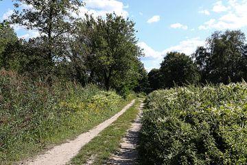 Landstraße im Wald zwischen den Bäumen von Frans Versteden