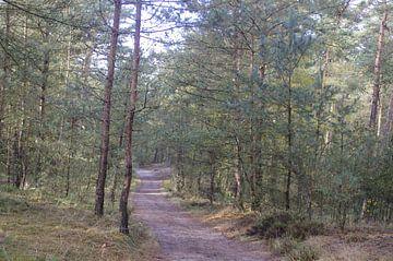 Zonnig bos von Ad Steenbergen