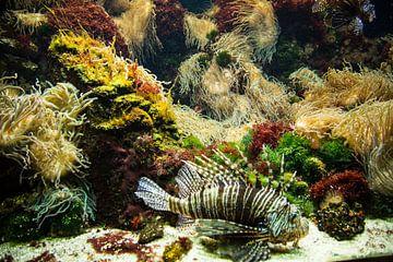 Aquarium voor aan de muur van Fotografie Jeronimo