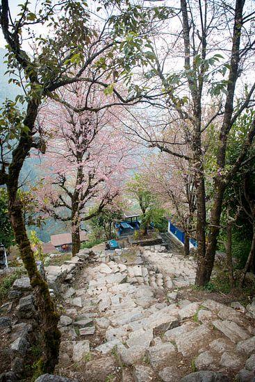 Downhill van Ellis Peeters