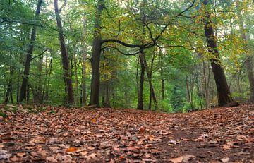Im Wald von Joyce Derksen