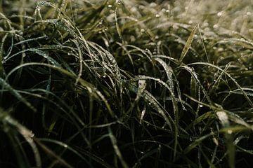 Ochtenddauw op gras van sonja koning