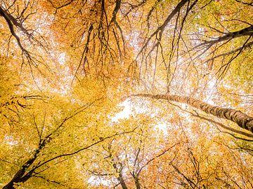 Bladerdak in herfstkleuren sur Erik Veldkamp