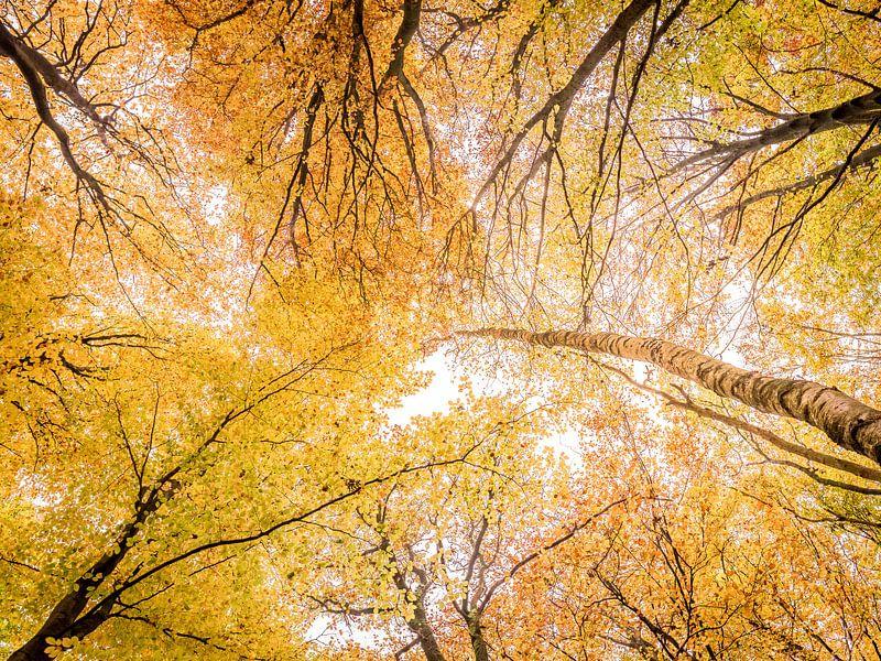 Bladerdak in herfstkleuren van Erik Veldkamp