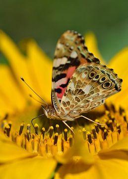 Een vlinder op een zonnebloem van Ulrike Leone
