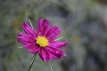 Paarse bloem van Van alles wat