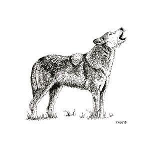Eenzame wolf von Thomas Kos