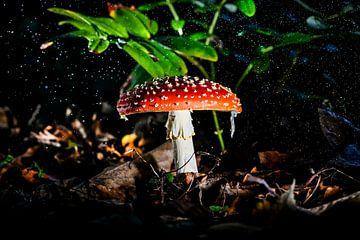 Rood met witte stippen in de regen van Corrine Ponsen