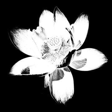 Les Jardins D'eau 3 von Esther Swaager ( Studio Toet)