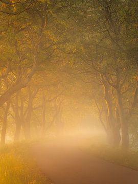Laan met walnootbomen in de Betuwe in prachtig gouden licht. van Jos Pannekoek