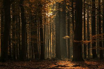 Moody forest van Ilya Korzelius