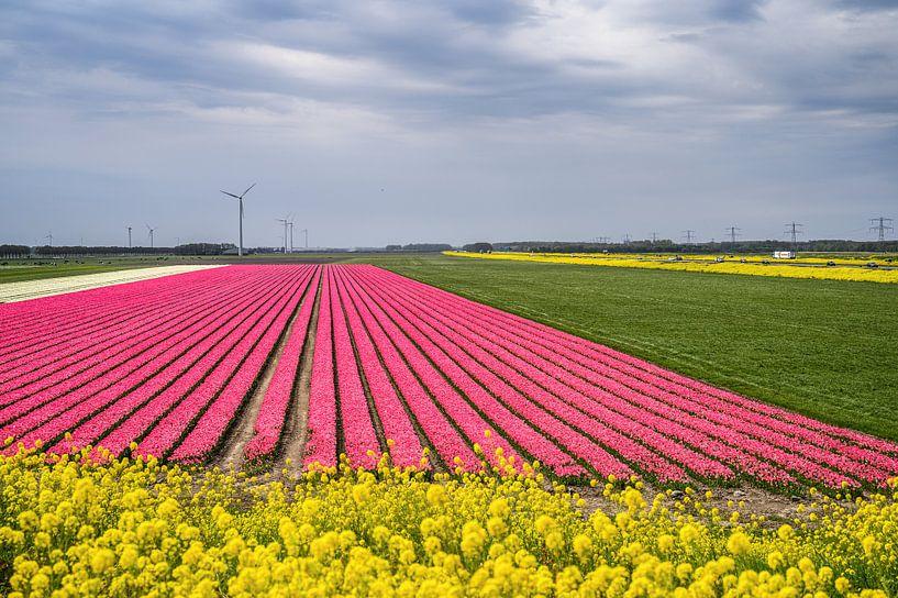 Tulpenveld in de Flevopolder, fotoprint van Manja Herrebrugh - Outdoor by Manja