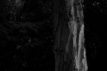 Baum in schwarz-weiß von Anita van Hengel