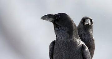 Portret van twee Raven van Beschermingswerk voor aan uw muur