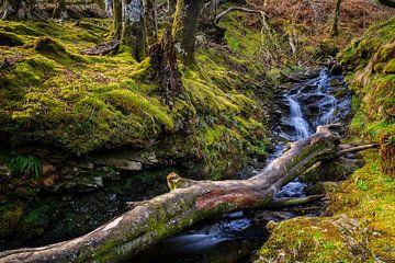 bos met stromende beek in de Schotse Hooglanden van gaps photography