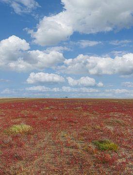 blühender Queller(Salicornia europaea)Sankt Peter-Ording von Peter Eckert