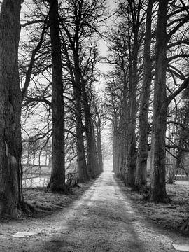 Weg zum Licht von Rex Quintyn