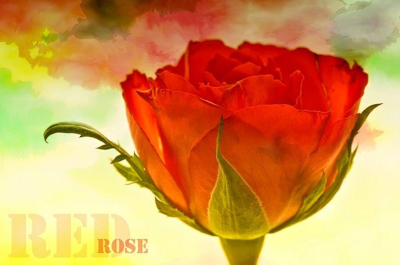 RED ROSE van Ellen Driesse