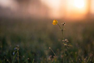 Blumen Teil 116 von Tania Perneel