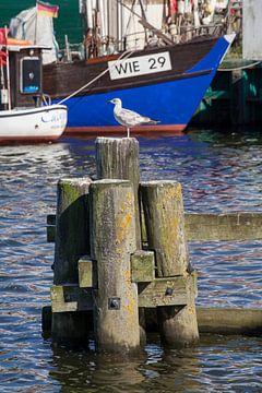 Greifswald : Holzmole mit Seemöwe im Hafen Wieck van