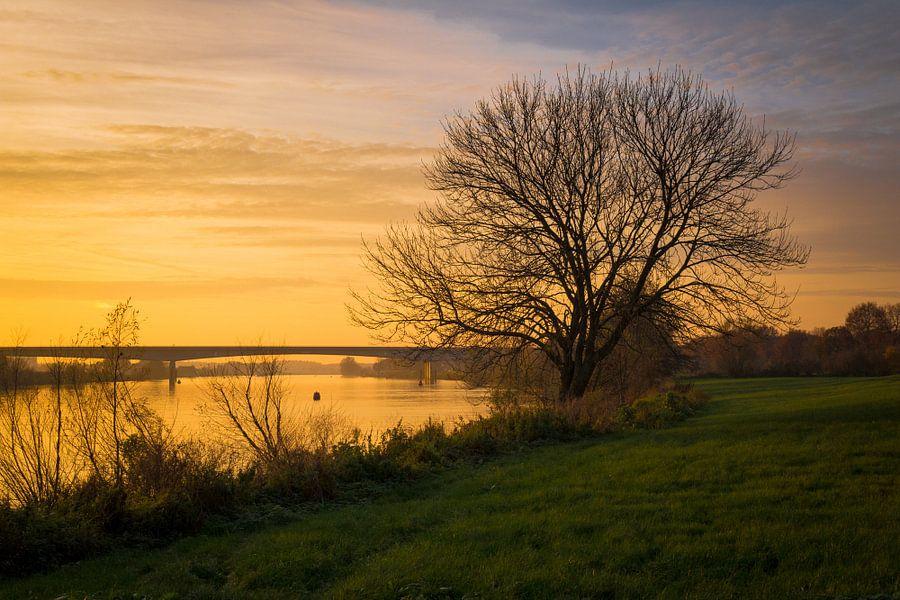 Waterfront Tree 'Autumn' van William Mevissen