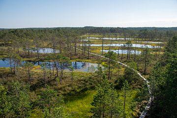 Torfseen in Estland von Manon Verijdt