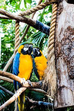 Papagei von Marcel van Laar