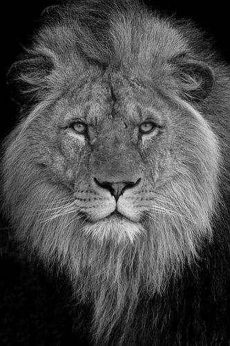 """Lion king in black&white"" van Natasja de Bruin"
