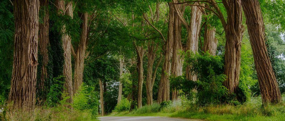 Acacia laan......