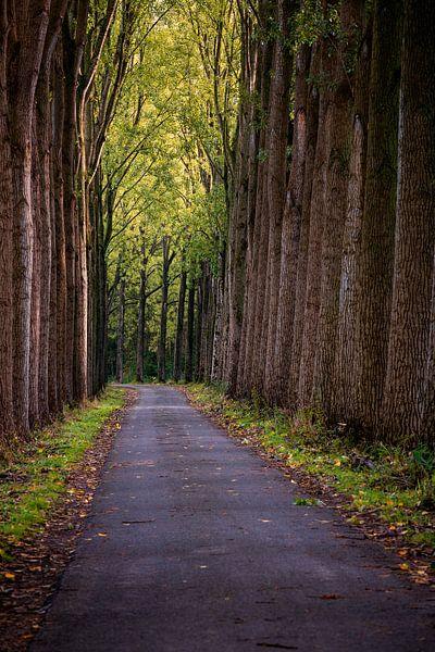 Herfst Bomen van Rob van der Teen